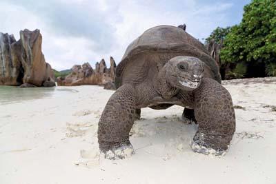 tartarughe Seychelles